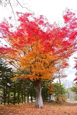 ブログ用紅葉①370.jpg