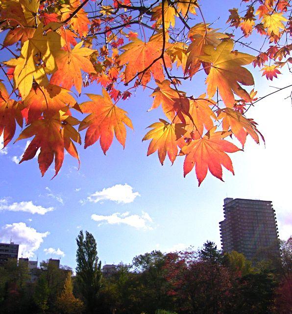 中島公園紅葉.jpg
