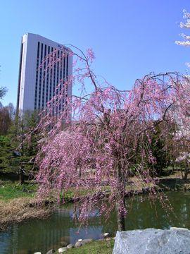 桜中島公園④.jpg