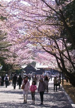 桜神宮①.jpg