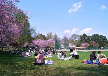 桜神宮②360.jpg